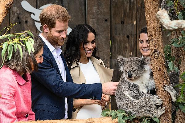 Гарри и Меган познакомились с коалами, названными в честь них