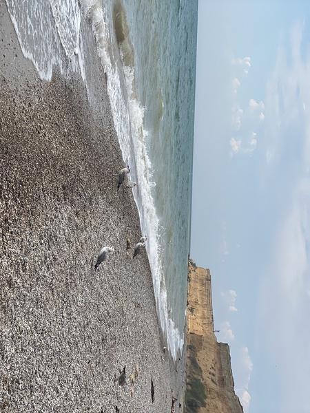 Рядом с домом певца много живописных пляжей