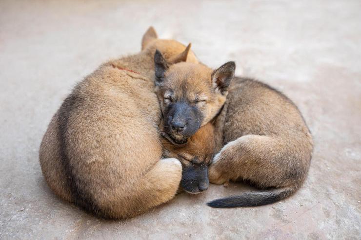 В волгоградском приюте нашли мертвых собак