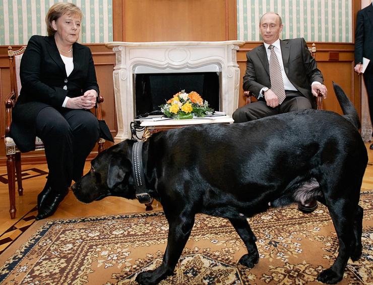Лабрадор — частый гость на встречах президента