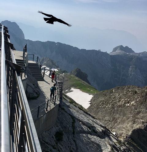 В Альпах можно увидеть грифов с гигантским размахом крыльев